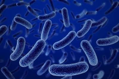 bacillus-clausii-1